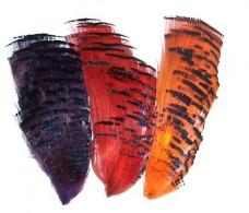 gp dyed collars